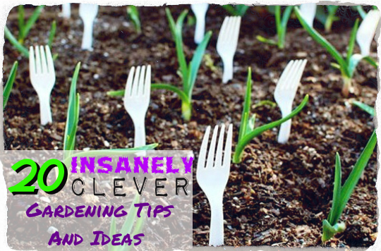 20 insanely clever gardening tips and ideas tinhatranch 20 insanely clever gardening tips and ideas4 workwithnaturefo