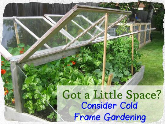 Got a Little Space Consider Cold Frame Gardening TinHatRanch