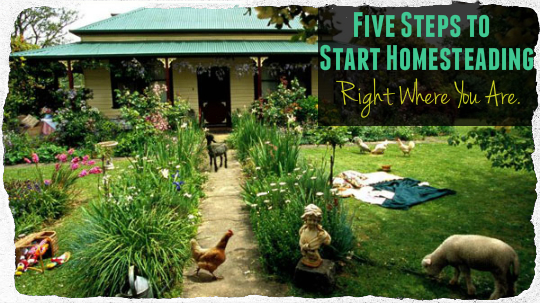 Five Steps to Start Homesteading Right Where You Are.