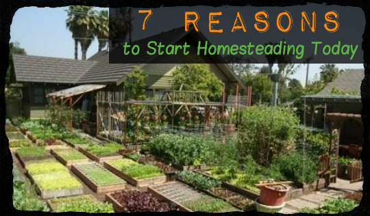 7 reasons to start homesteading today tinhatranch for How to start homesteading today