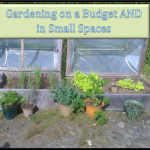 Gardening-on-a-Budget-Small-Space