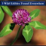 Wild_Edibles